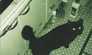 楽曲解説:LAMP vol.1 -1999年のBUMP OF CHICKENと制作エピソード