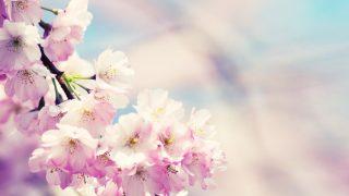 楽曲解説:pinkie vol.1 「桜」と「小指」に込めた歌詞の意味
